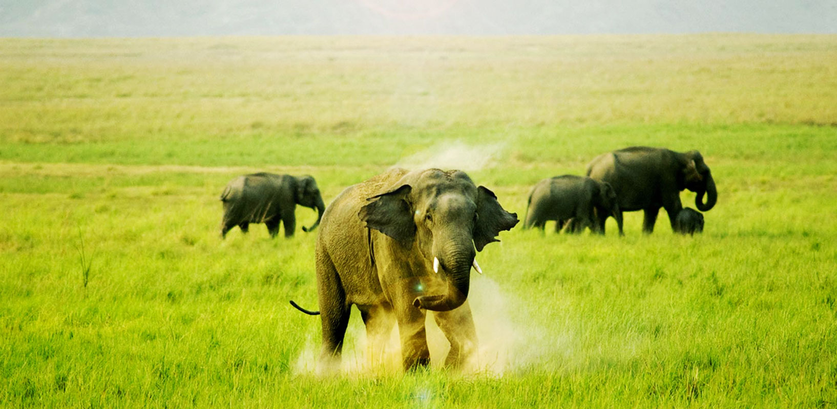 jim-corbett-national-park-tourism