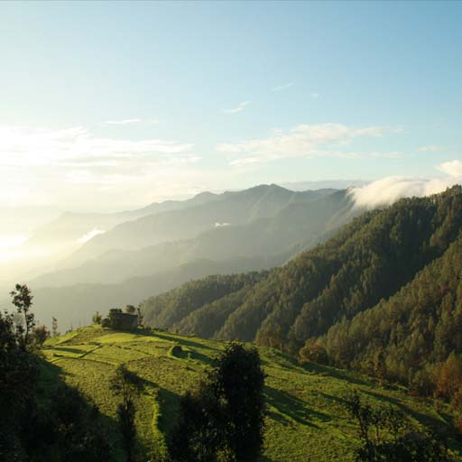 Images for Binsar