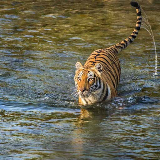 Images for Jim Corbett National Park